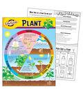 Life Cycle of a Plant Learning Chart 17\u0022x22\u0022 6pk