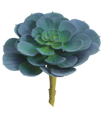 Bloom Room 5'' Echeveria Pick-Blue