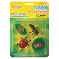 Insect Lore Ladybug Life Cycle Stages Figurines