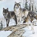 No Sew Fleece Throw Kit-Photo Real Wolves