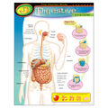 The Human Body–Digestive System Learning Chart 17\u0022x22\u0022 6pk