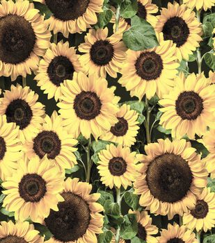 Harvest Cotton Fabric-Packed Sunflowers