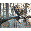 Dimensions Paint By Number Kit 11\u0022x14\u0022-Wise Owl