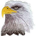 Patch-Eagle