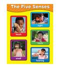 Carson-Dellosa The Five Senses Chart 6pk