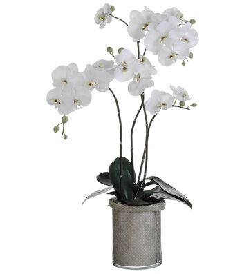 Bloom Room Luxe 37'' Orchid Plant In Basket And Glass-White