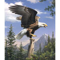 Reeves Paint By Number Artist Collection 9\u0022X12-Screaming Eagle