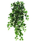 30\u0022 Medium Holland Ivy Hanging Bush