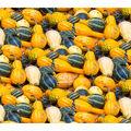 Harvest Cotton Fabric-Gourds