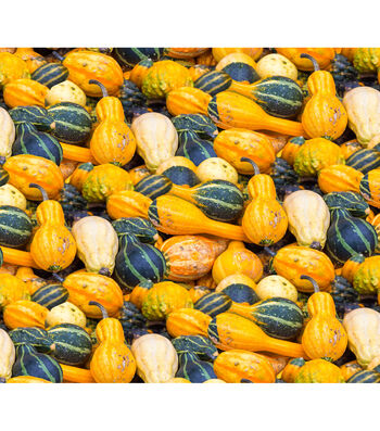 Harvest Cotton Fabric-Gourds