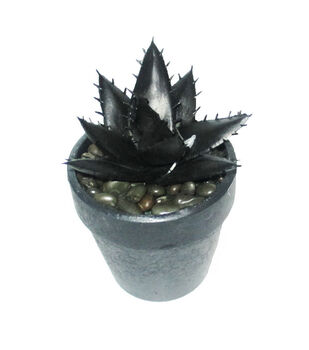Maker's Halloween Small Potted Succulent-Black