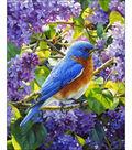 Collection D\u0027Art Diamond Embroidery/Printed/Gem Kit 48X38 cm-Bird