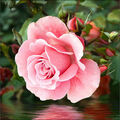 RTO Diamond Mosaic Embroidery Kit 25X25cm-Rose On The Water