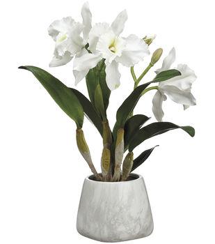 Cattleya Orchid Plant in Terracotta Pot 18''-White