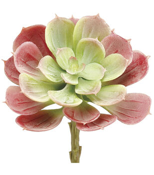 Bloom Room 6'' Soft Echeveria Pick-Green & Red