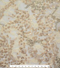 Performance Stretch Lace Chelsea Sequin Apparel Fabric-Matte Gold