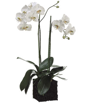 Bloom Room Luxe 31'' Phalaenopsis Orchid Plant Polyresin Container-White