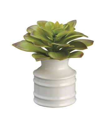 Bloom Room 5'' Echeveria in Ceramic Vase with Re-Shippable Box-Green