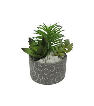 In the Garden 4.75'' Tabletop Fringe Succulents
