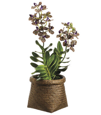 Bloom Room Luxe 22'' Vanda Orchid Plant In Basket-Purple
