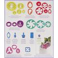Wilton Gum Paste Flower Cutter Set 28pcs