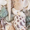 Panacea Natural Sea Shell Mix 12pcs