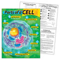 Parts of a Cell Learning Chart 17\u0022x22\u0022 6pk
