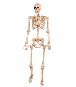 The Boneyard Large Skeleton Bones