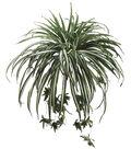 28\u0022 Spider Plant