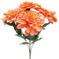 Fresh Picked Spring 20\u0027\u0027 Dahlia Bush-Peach