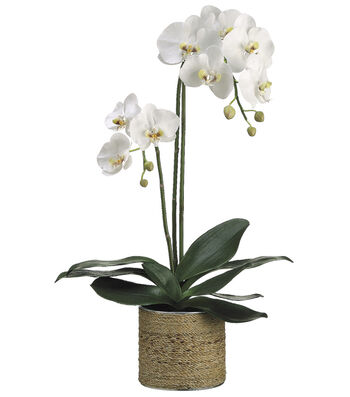 Bloom Room Luxe 29'' Phalaenopsis Orchid Plant In Sisal Tin Pot-White