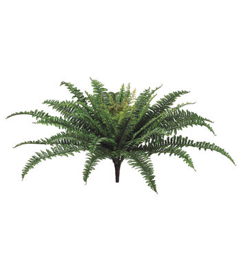 "25"" Boston Fern Bush"
