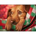 RTO Diamond Mosaic Embroidery Kit 40X30cm-Dachshund Puppy