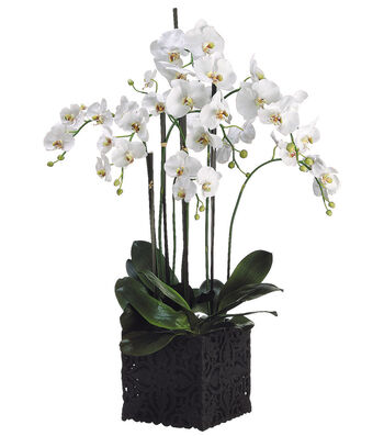 Bloom Room Luxe 45'' Orchid Plant In Clay Pot-White