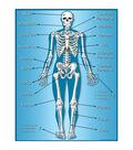 Teacher Created Resources Skeleton Chart 6pk