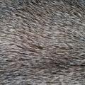 Luxury Faux Wolf Fur Fabric -Gray
