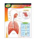 The Human Body–Respiratory System Learning Chart 17\u0022x22\u0022 6pk