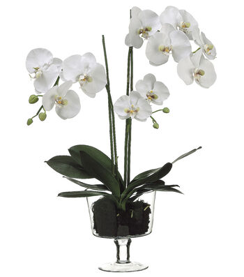 Bloom Room Luxe 29'' Phalaenopsis Orchid Plant In Glass Vase-White