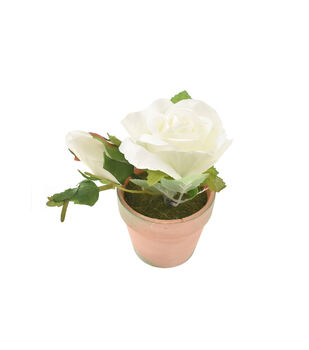 Fresh Picked Spring 5'' Roses in Clay Pot-White