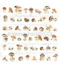 Alexandra Renke Cooking Paper 12\u0022X12\u0022-Mushrooms
