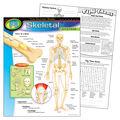 The Human Body–Skeletal System Learning Chart 17\u0022x22\u0022 6pk