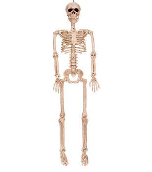 The Boneyard 36'' Medium Skeleton Bones