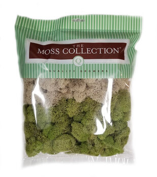 Quality Growers The Moss Collection Reindeer Moss-Natural & Spring Green