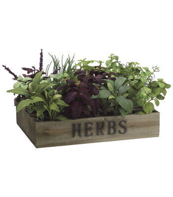 Bloom Room Luxe 9'' Herb Garden In Wood Box-Green