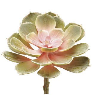 Bloom Room 6'' Soft Echeveria Pick-Light Green