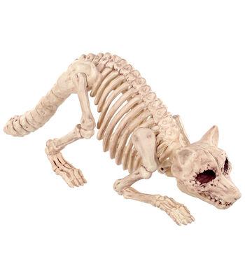 The Boneyard Raccoon Bones