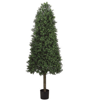Cone Shaped Boxwood Topiary in Plastic Pot 5.5'