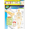 The Human Body Learning Charts Combo Pack Set of 7