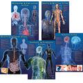 Human Body Facts Bulletin Board Set, 2 Sets
