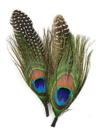 "Natural Feather Pick with nylon loop 5.5"" (14 cm) Peacock/Guinea, 2 pieces"